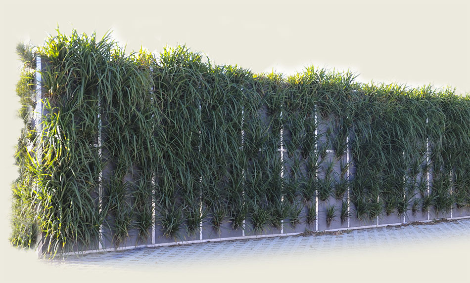 Bepflanzte Wand flor greencitywall